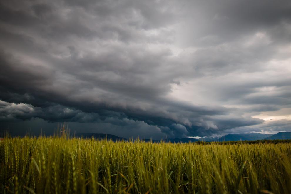 Strum zieht über Weizenfeld