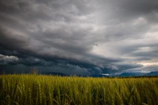 Überlastung in der Landwirtschaft: Welche Rolle spielen Agrotreuhandstellen in der Früherkennung?